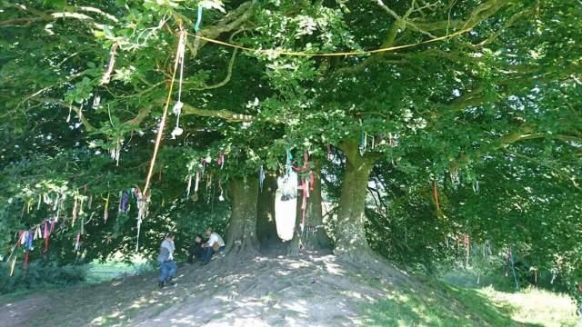 Tree tea party at Avebury